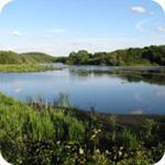 Denaby Ings Nature Reserve