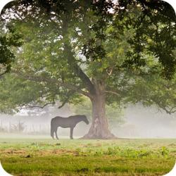 TPT equestrian guide